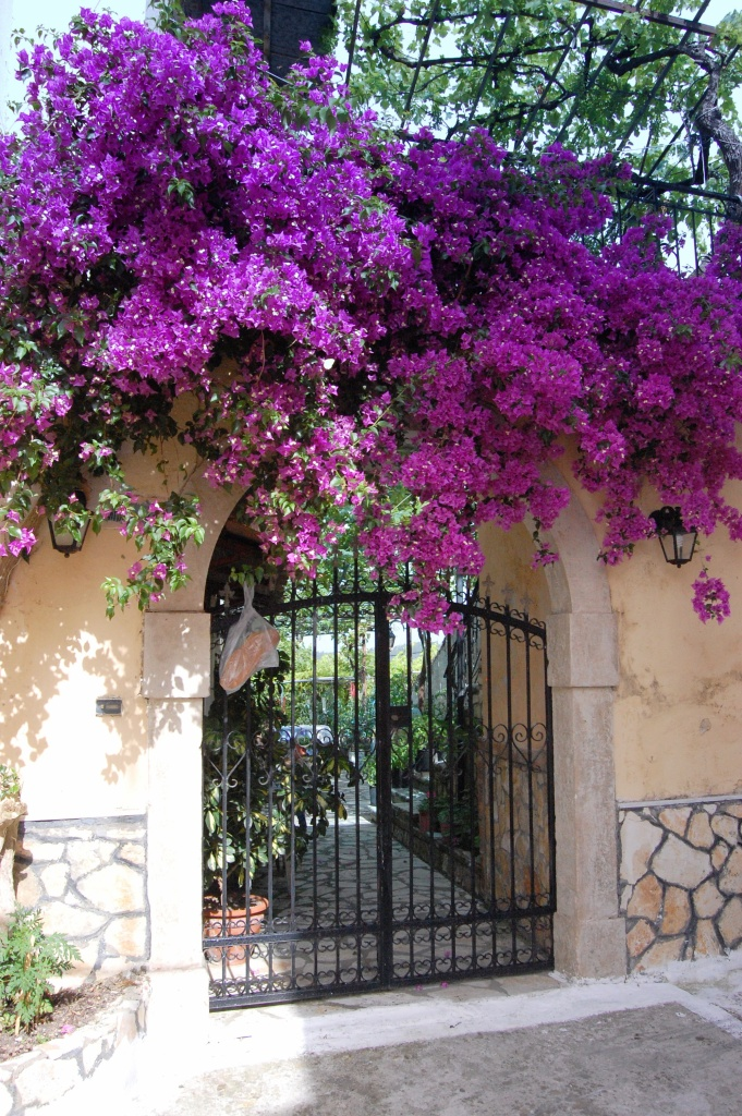 Mesaria bread and bougainvillea
