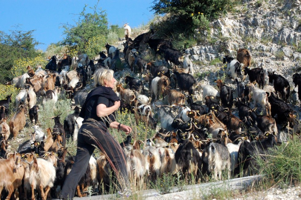 A modern goatherd and her flock near Stavrota